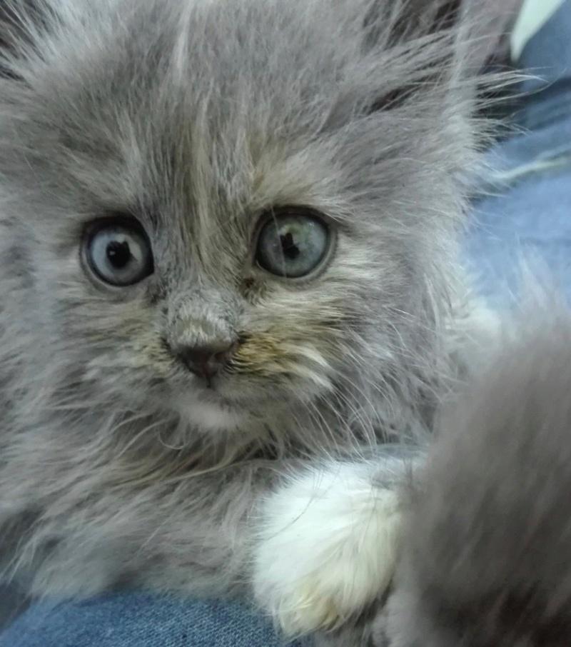 Nos chats à l'adoption Img_2031