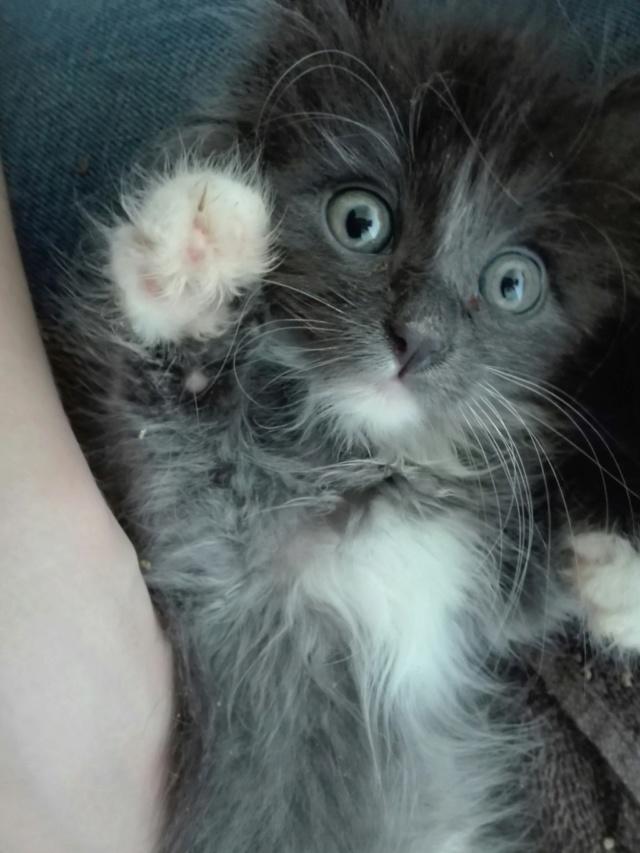Nos chats à l'adoption Img_2033