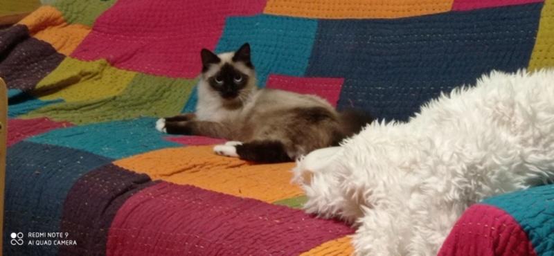 Nos chats à l'adoption Img_2040