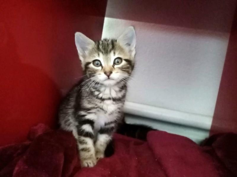 Nos chats à l'adoption Img_2113