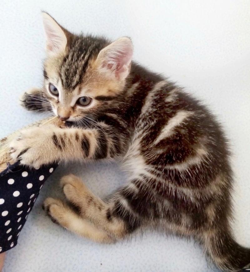 Nos chats à l'adoption Img_2115