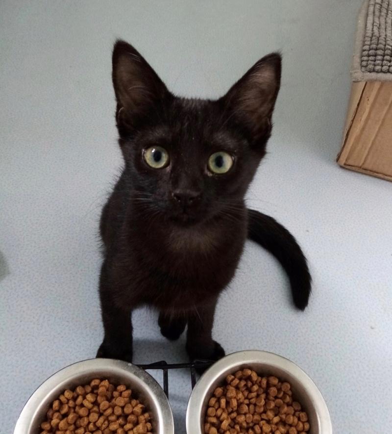 Nos chats à l'adoption Img_2213