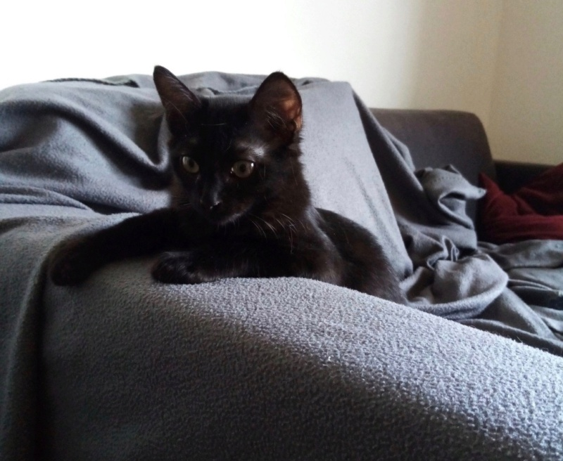 Nos chats à l'adoption Img_2214