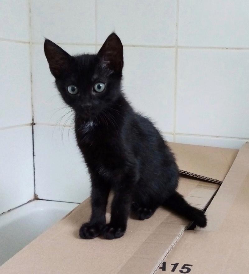 Nos chats à l'adoption Img_2215