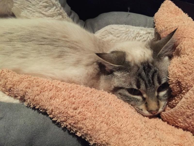Nos chats à l'adoption Img_2510