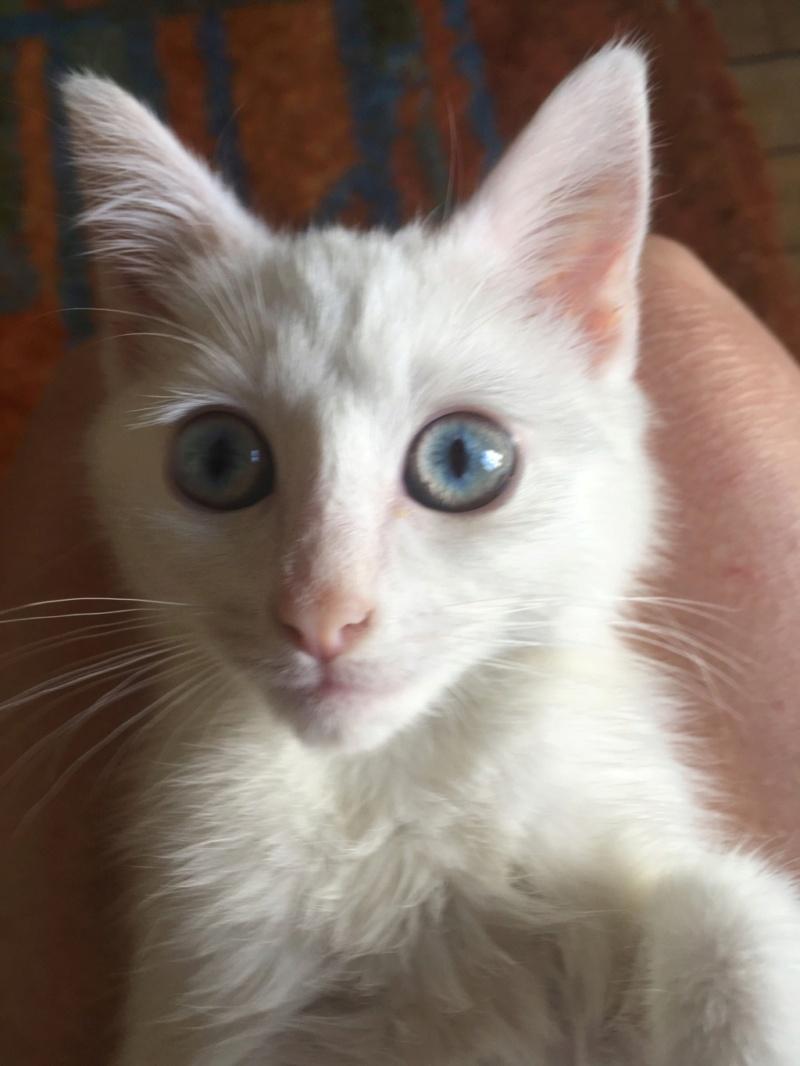 Nos chats à l'adoption Img_4012