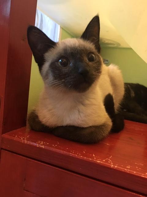 Nos chats à l'adoption Img_4911