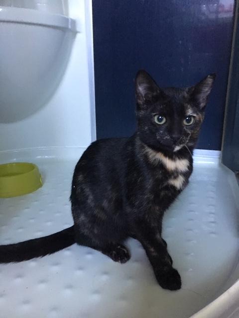 Nos chats à l'adoption Img_5010