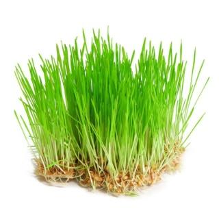 Acharnement sur les plantes : besoin d'herbe à chat ?  Jeunes12