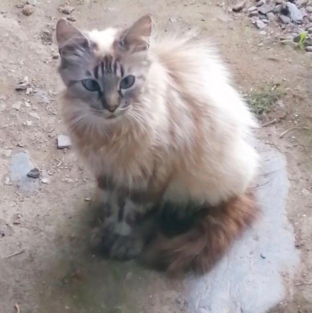 Nos chats à l'adoption Maman_10