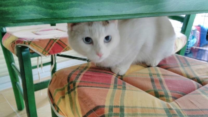 Nos chats à l'adoption Mounet10