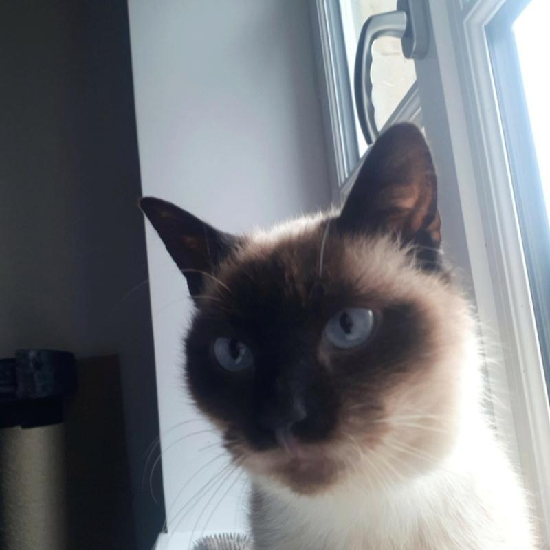 Nos chats à l'adoption Noiset10
