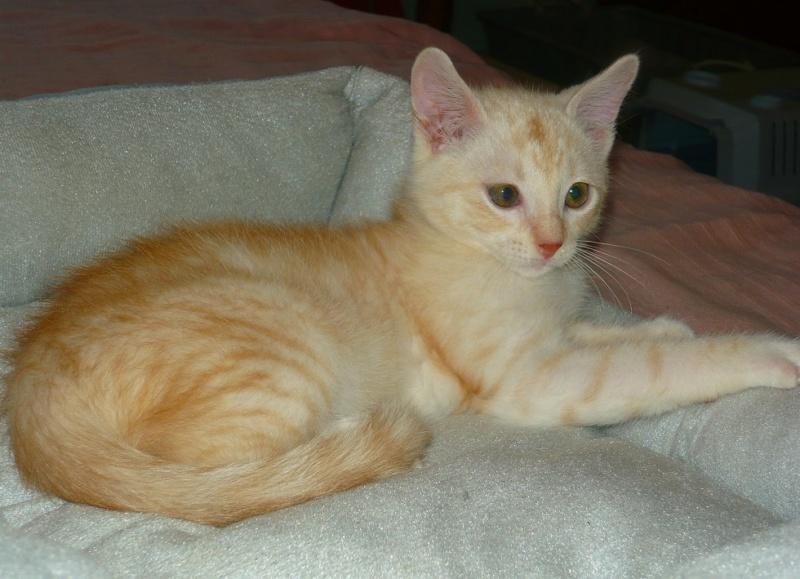 Photos des chats sauvés, avant/après - Page 9 P1130611