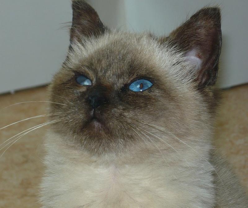 Nos chats à l'adoption P1140210