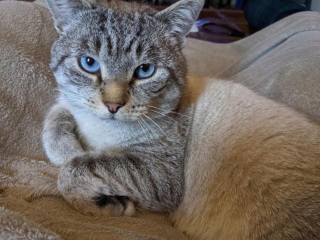 Nos chats à l'adoption Pxl_2011