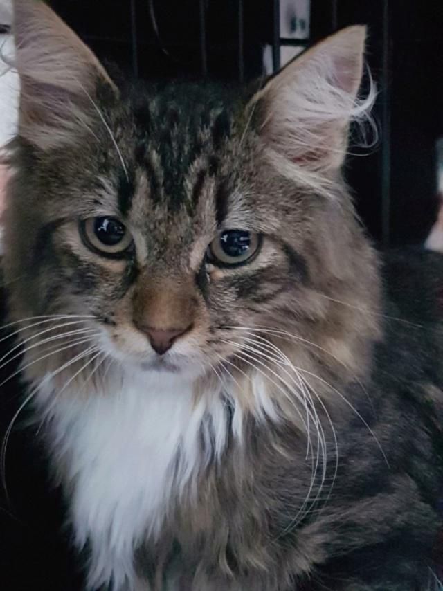 Nos chats à l'adoption Resize13