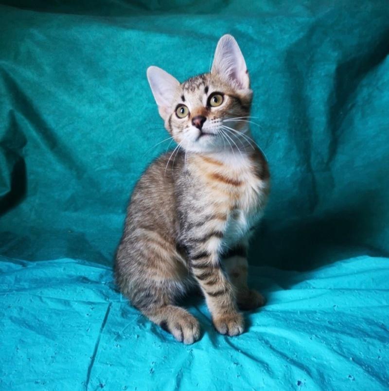 Nos chats à l'adoption Sobek111