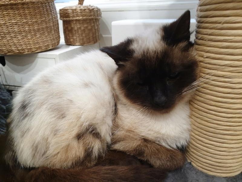 Nos chats à l'adoption Suzie_10
