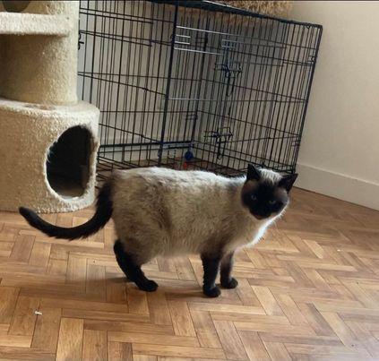 Nos chats à l'adoption Tm1010