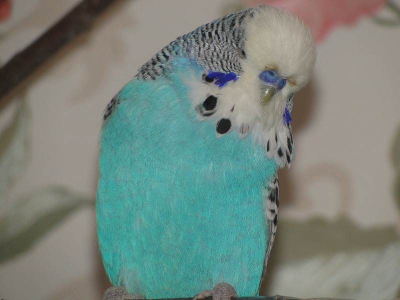 Птицы Эрики Dsc09113