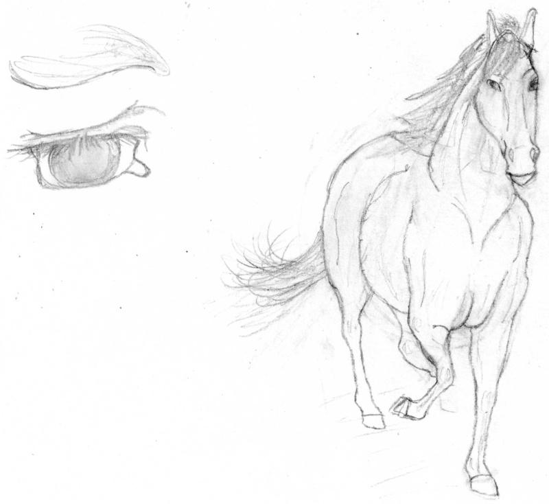 Galeria de Crisalia Cabalo10