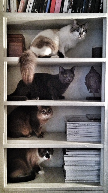 APACHE (Kenzo), YSUN (Mistigri), UMAï (Dodo) et SEYEN (Amani) - Page 2 Photo_63