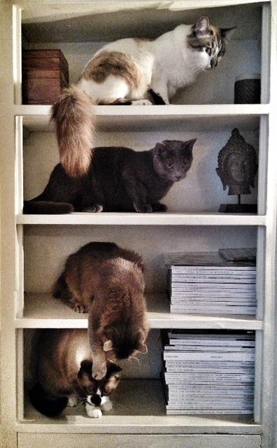 APACHE (Kenzo), YSUN (Mistigri), UMAï (Dodo) et SEYEN (Amani) - Page 2 Photo_64