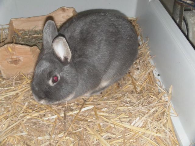 une photo de notre lapin Dvci0012