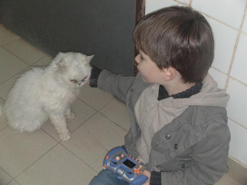ROSY en famille d'accueil à vie Dvci0517