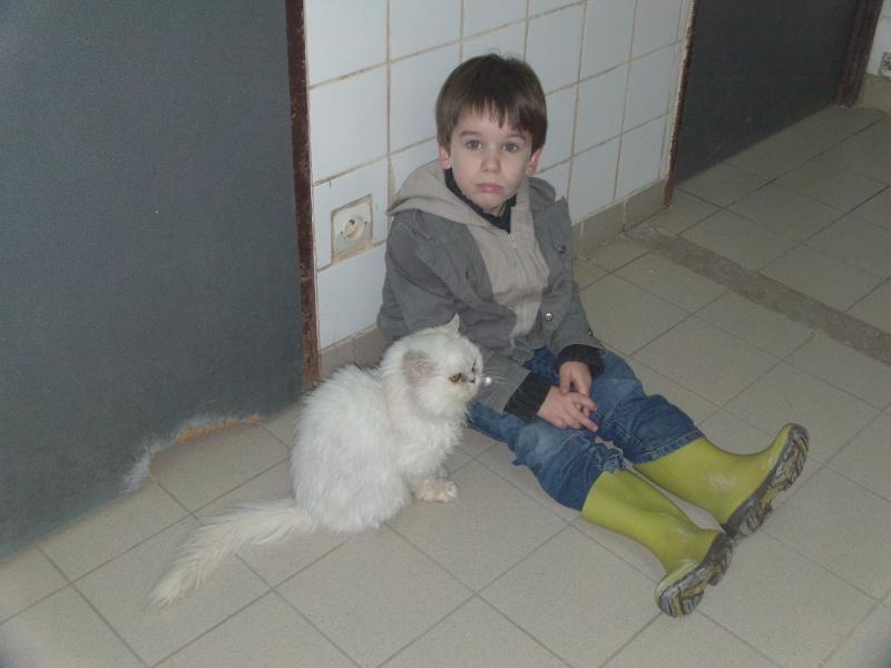 ROSY en famille d'accueil à vie Dvci0518