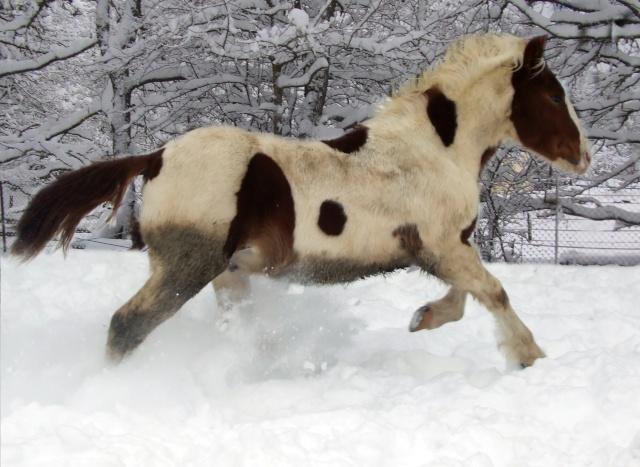 Balade avec un poulain en longe ( accompagné d'un autre cheval) Dunkn_11