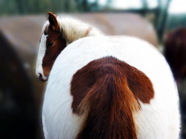 Balade avec un poulain en longe ( accompagné d'un autre cheval) P1030817