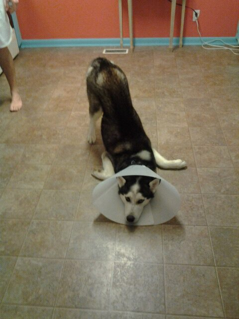 Finns in some serious pain Cone_o10