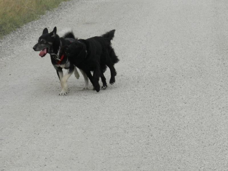 Echo et son nouveau copain Dscn3815