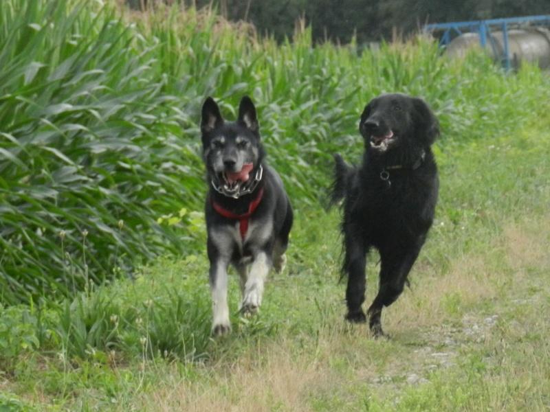 Echo et son nouveau copain Dscn3816