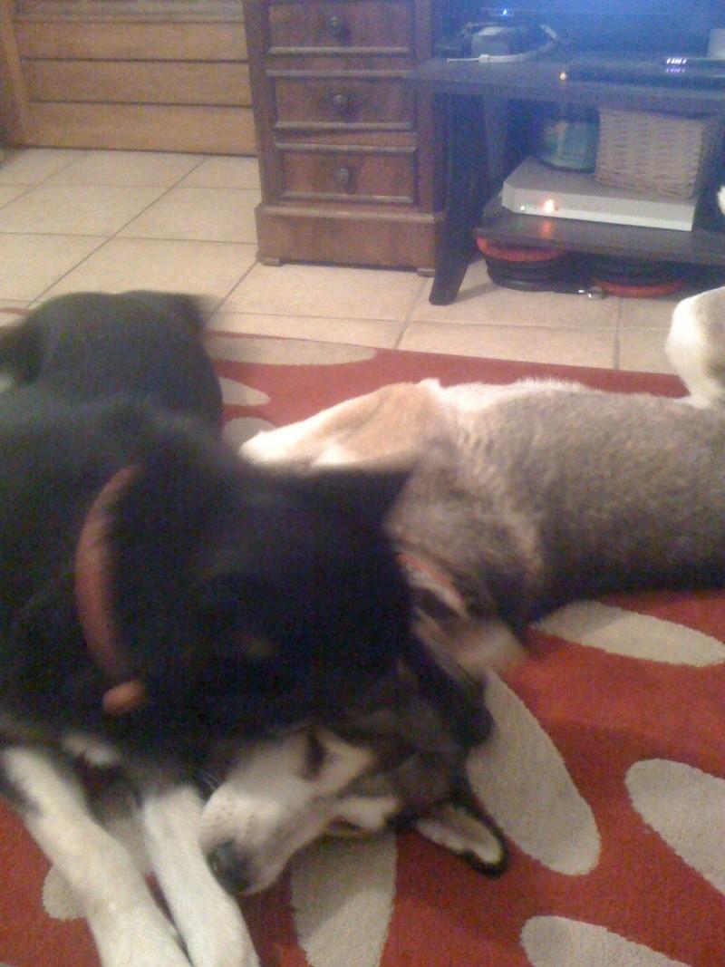 Les p'tits loups fêtent l'adoption de Link à leur manière Img_0622