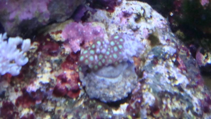 coraux  Dsc03111