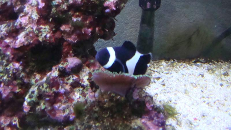 coraux  Dsc03113
