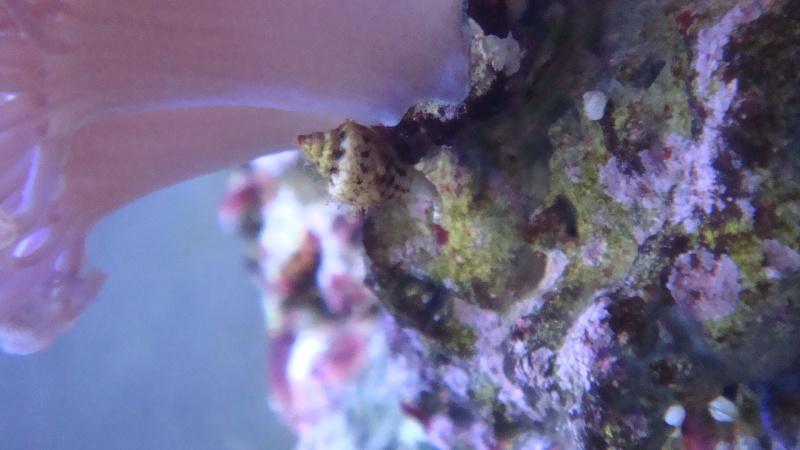 mes coraux  Dsc03219