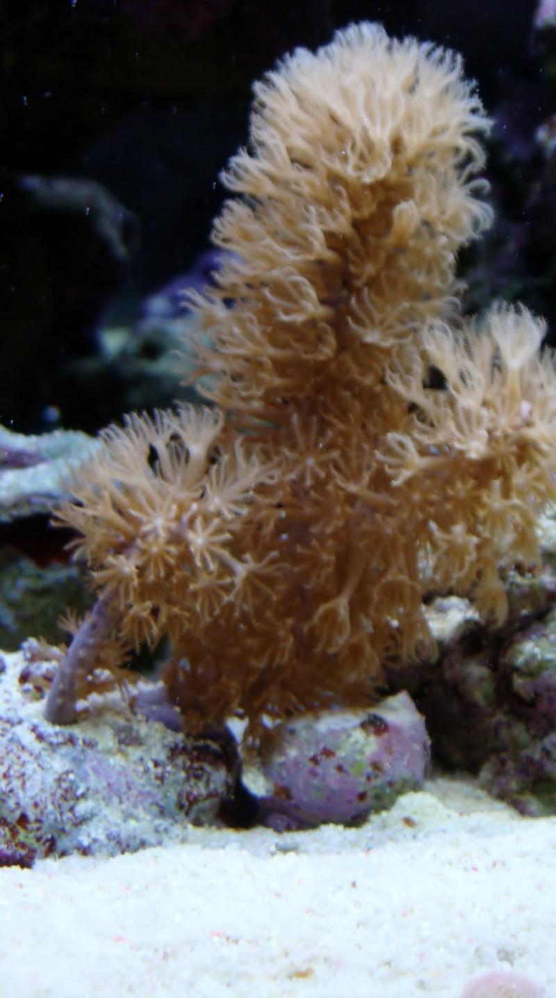 coraux  Dsc04510