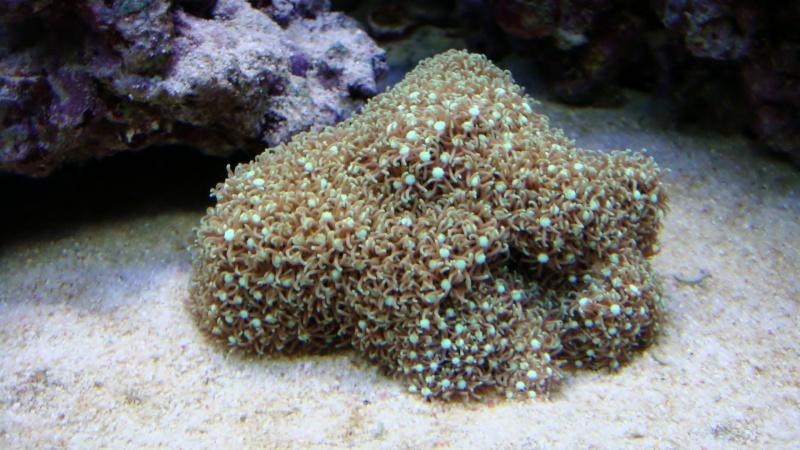 coraux  Dsc04511