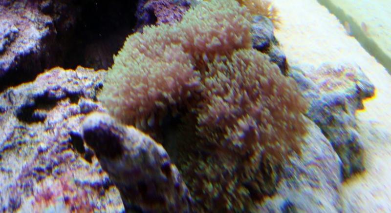 coraux  Dsc04515
