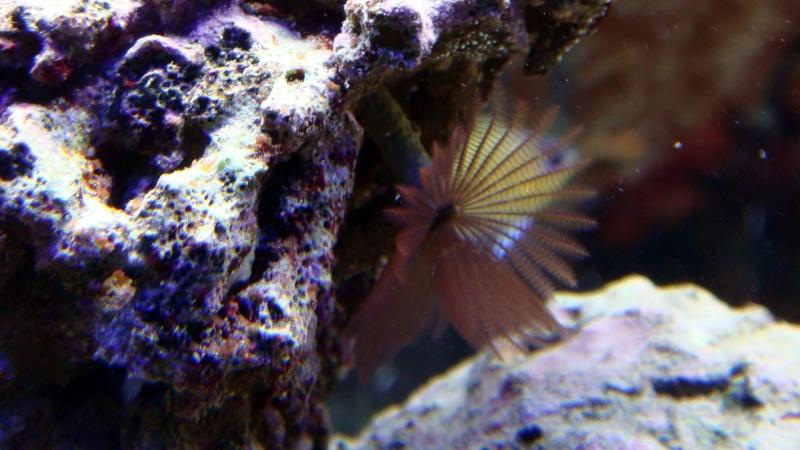 coraux  Dsc04611
