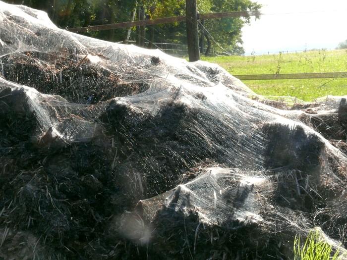 Alles Spinne-rei Unterw11
