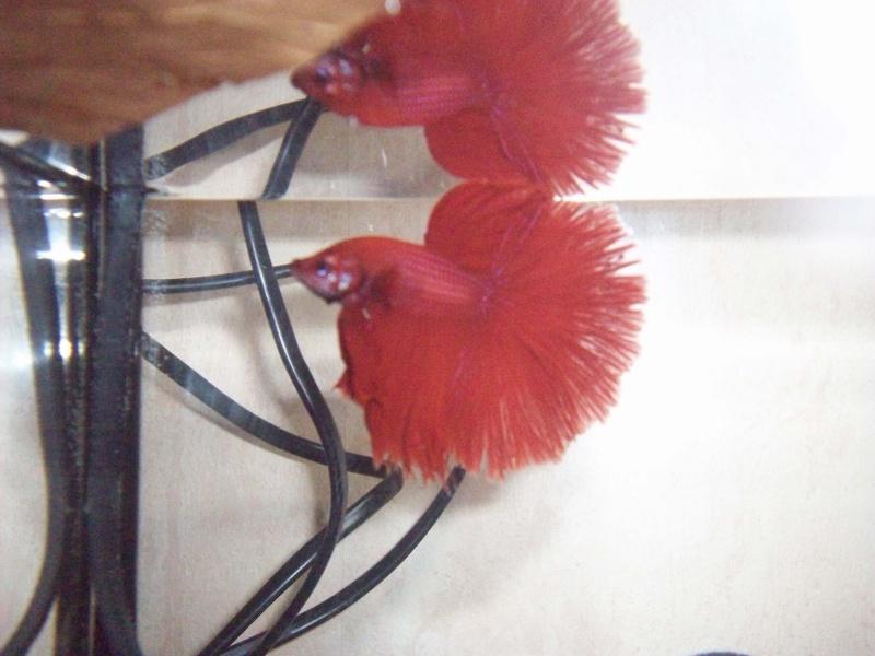 Repro HM rouge X QDV rouge 107_0510
