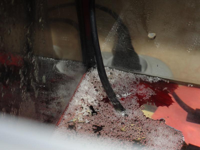 [ PHOTOS ] Les nids de bulles de nos poissons Dsc00021
