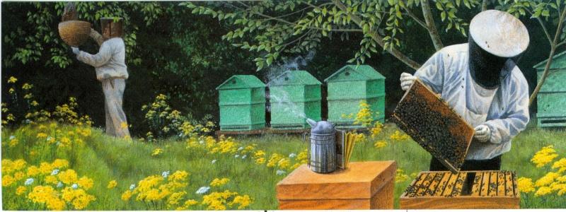 Motiv Bienen und Hummeln - Seite 3 Bijen_11