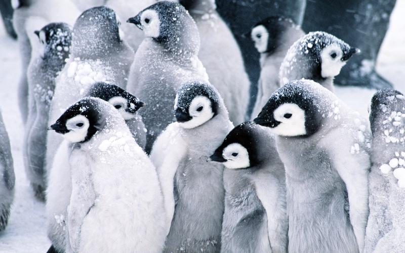 Humeur du jour... en image - Page 4 Pingoi10