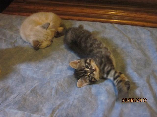 Prise en charge des 3 bébés de Virginie Img_3230