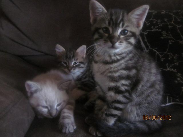 Prise en charge des 3 bébés de Virginie Img_3311